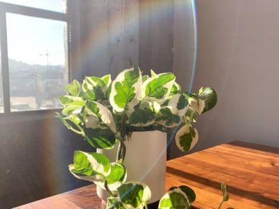 Houseplants to boost mood
